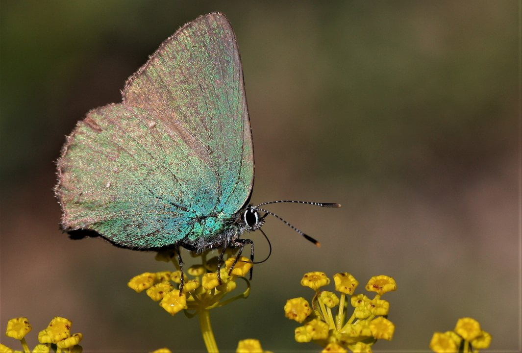 kostas-sotiropoulos-butterfly